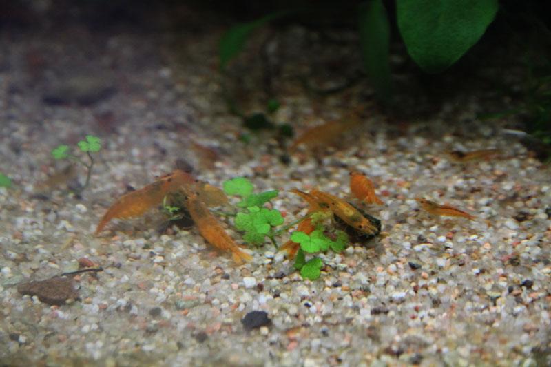 Mur végétal avec aquarium de 320L ---> Paludarium - Page 4 Img_9815