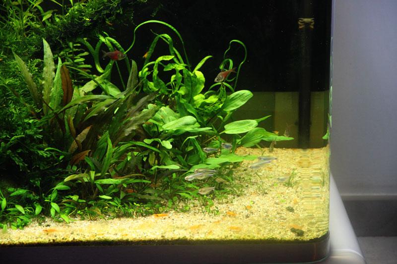 Mur végétal avec aquarium de 320L ---> Paludarium - Page 4 Img_9817