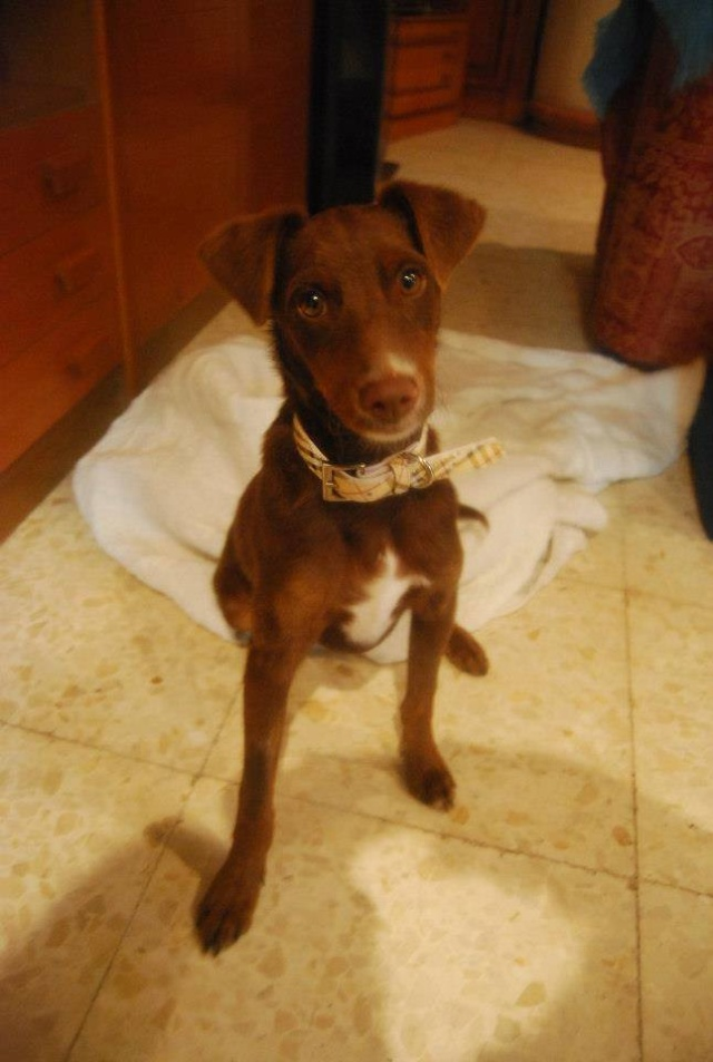 Canis - Golfo 13818410