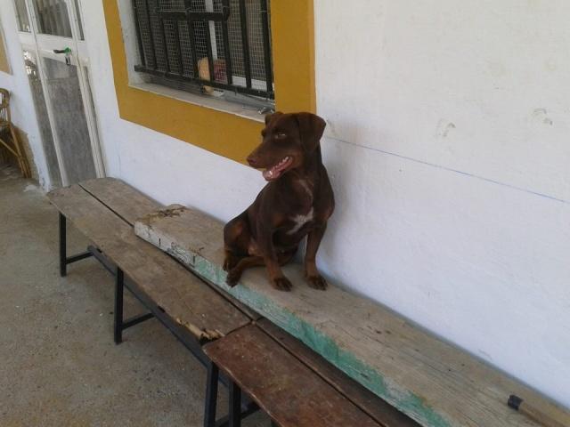 Canis - Duna Duna510