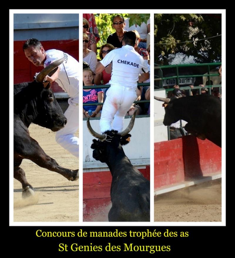 Concours de manades : Trophée des as St Genies des Mourgues (22/08/2013 ) _dsc5110