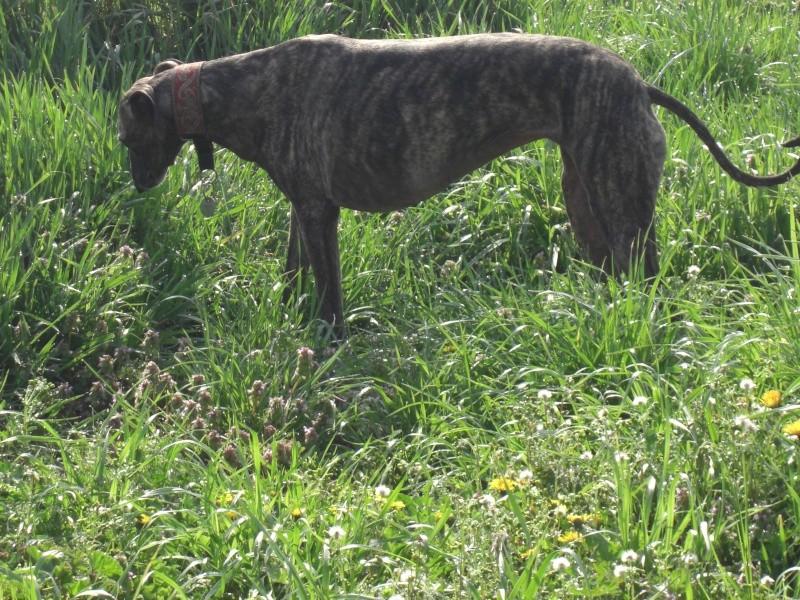 "Les"" Doggies"" de La Rive Spring23"