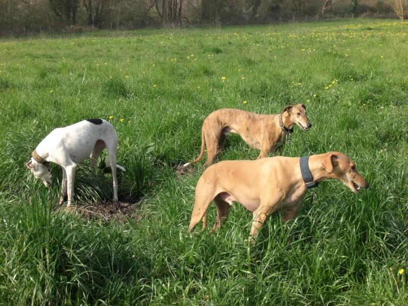 "Les"" Doggies"" de La Rive Spring25"