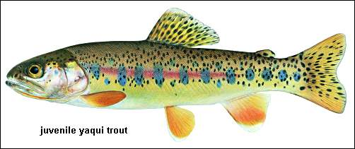 trout.. Yaqui10