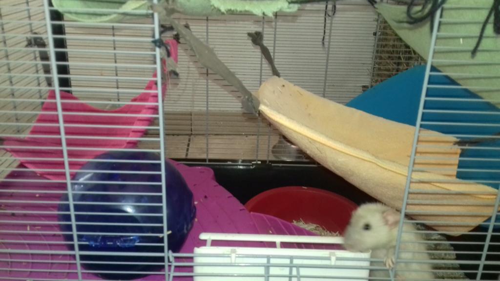 Mes cages à ratous  20190518