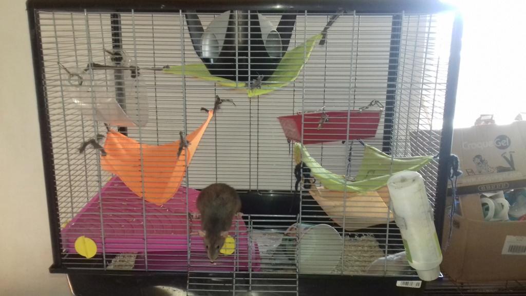 Mes cages à ratous  20190524
