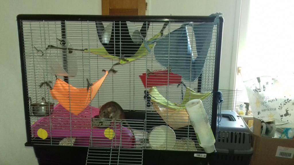 Mes cages à ratous  20190545