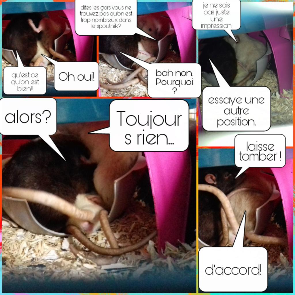 mes petits ratounets. - Page 26 Picsar16