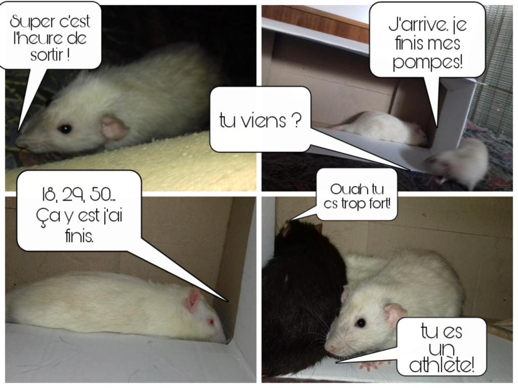 mes petits ratounets. - Page 26 Picsar17