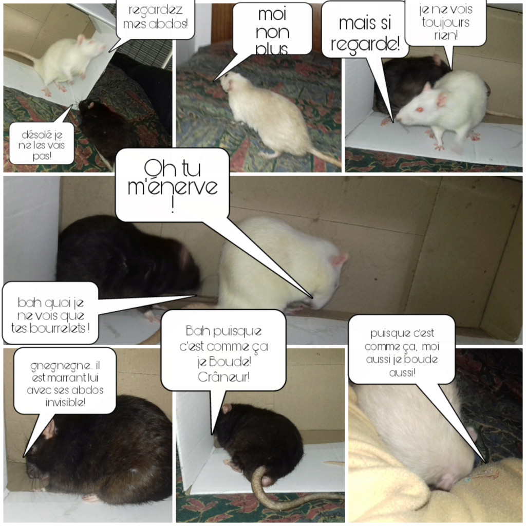 mes petits ratounets. - Page 26 Picsar18