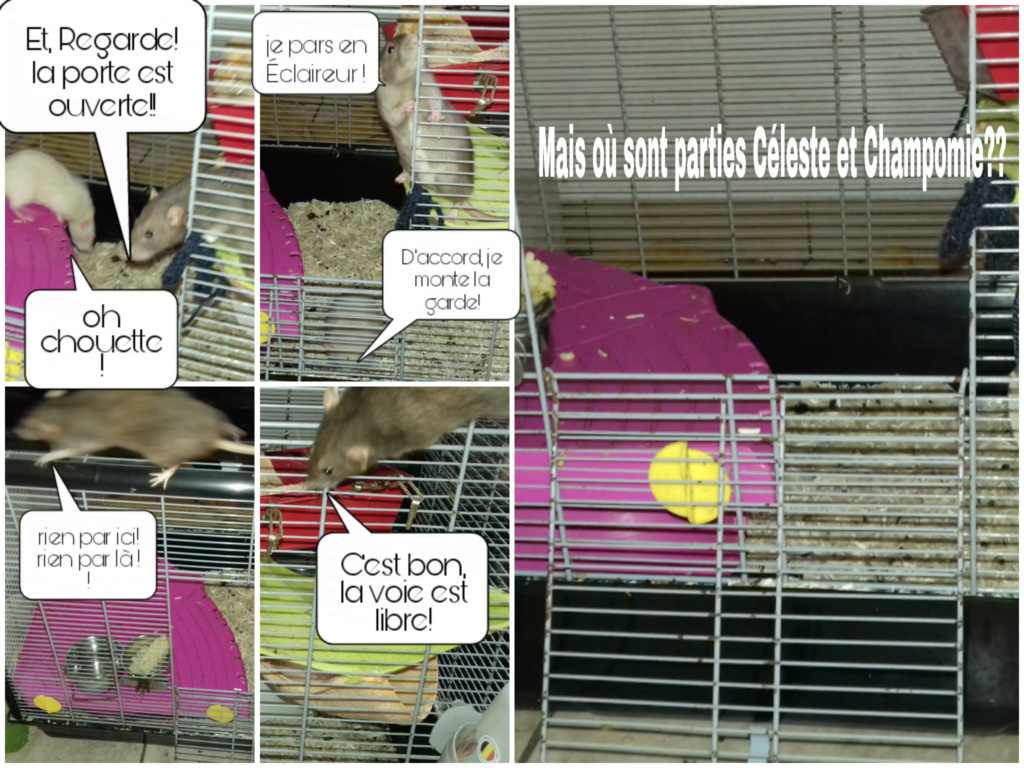 mes petits ratounets. - Page 26 Picsar20