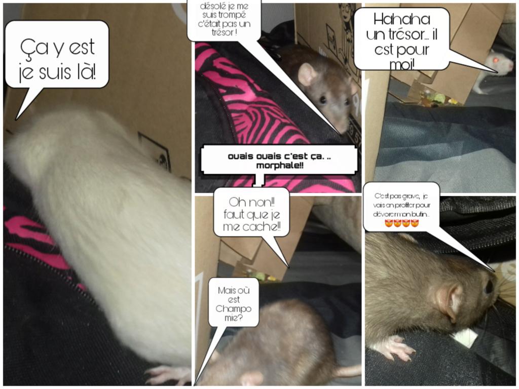 mes petits ratounets. - Page 27 Picsar26