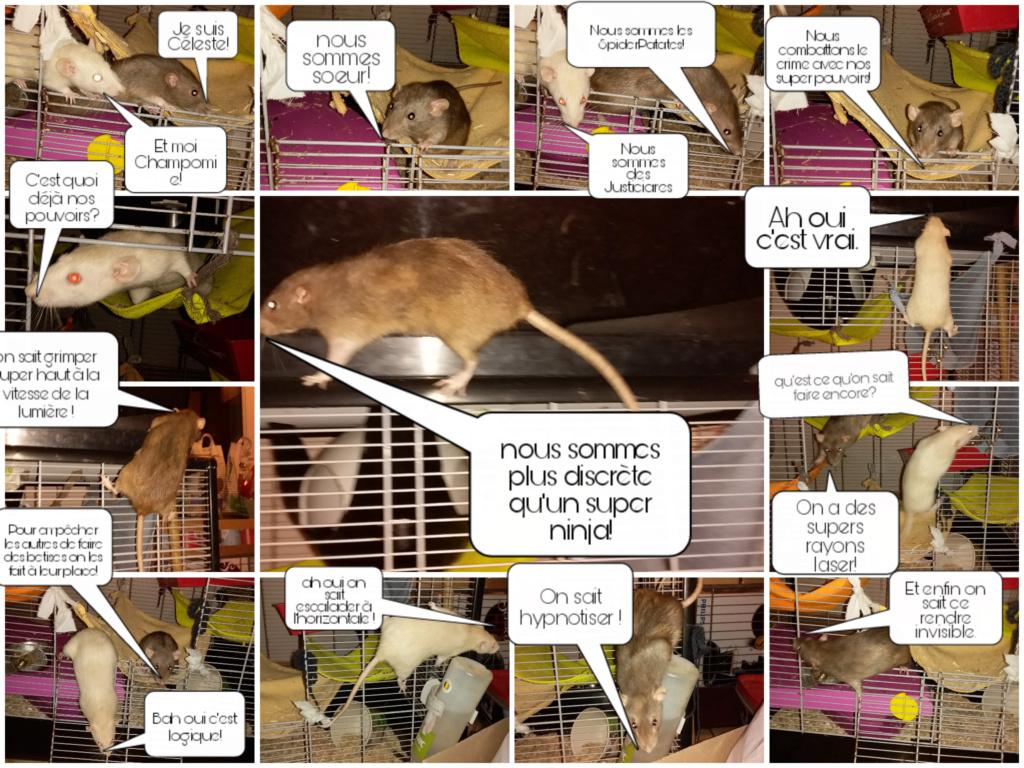 mes petits ratounets. - Page 27 Picsar49