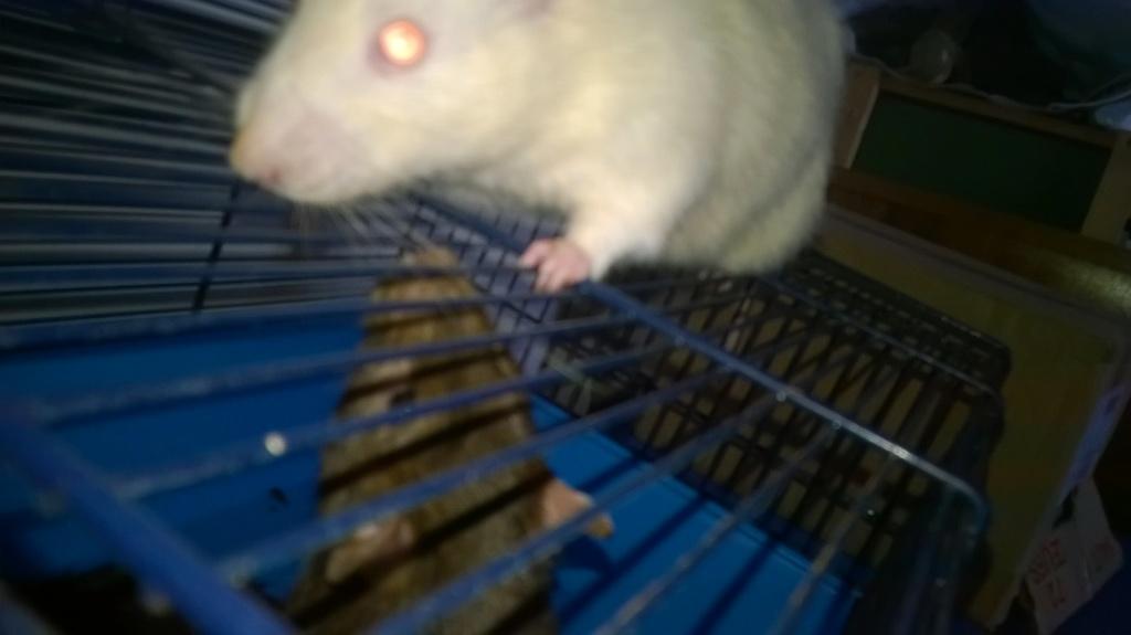 mes petits ratounets. - Page 22 Wp_20115