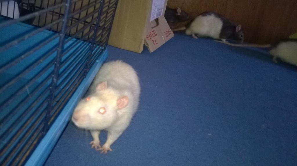 mes petits ratounets. - Page 22 Wp_20120