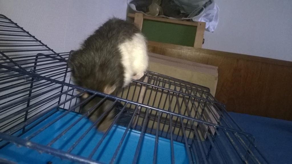 mes petits ratounets. - Page 22 Wp_20124