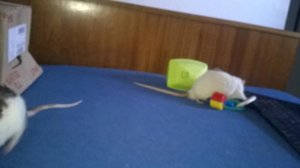 mes petits ratounets. - Page 22 Wp_20126