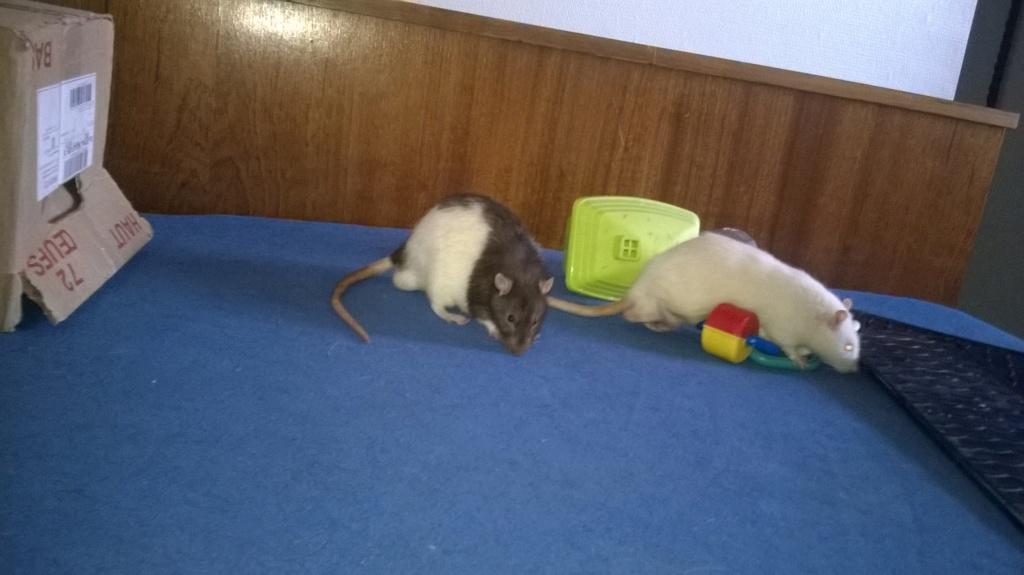 mes petits ratounets. - Page 22 Wp_20127