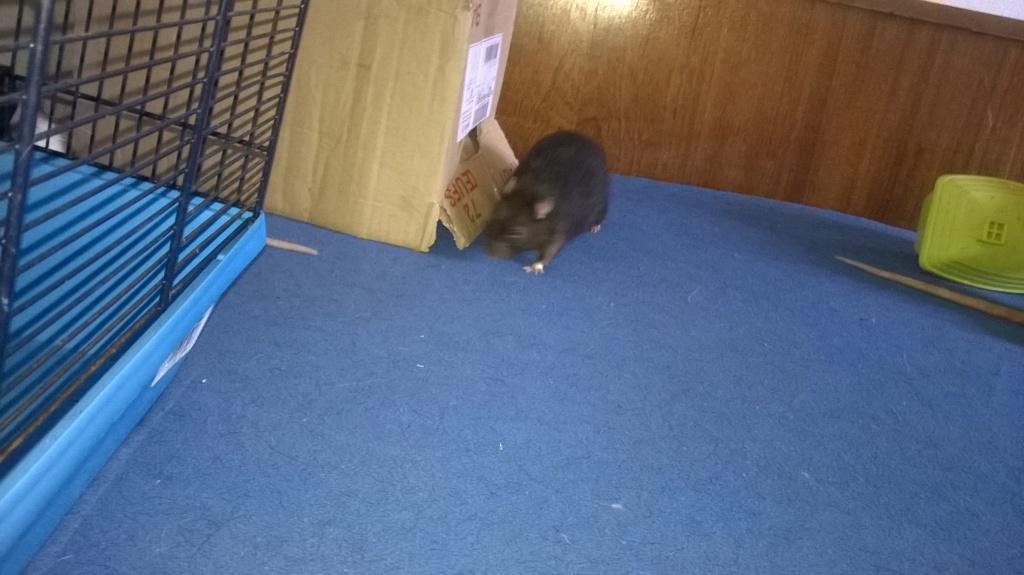 mes petits ratounets. - Page 22 Wp_20128