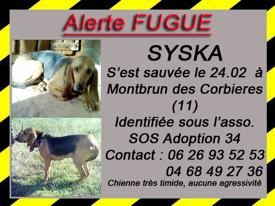 Alerte fugue dans le 11 Syska_10