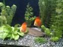Mes petits. .. Photo_14