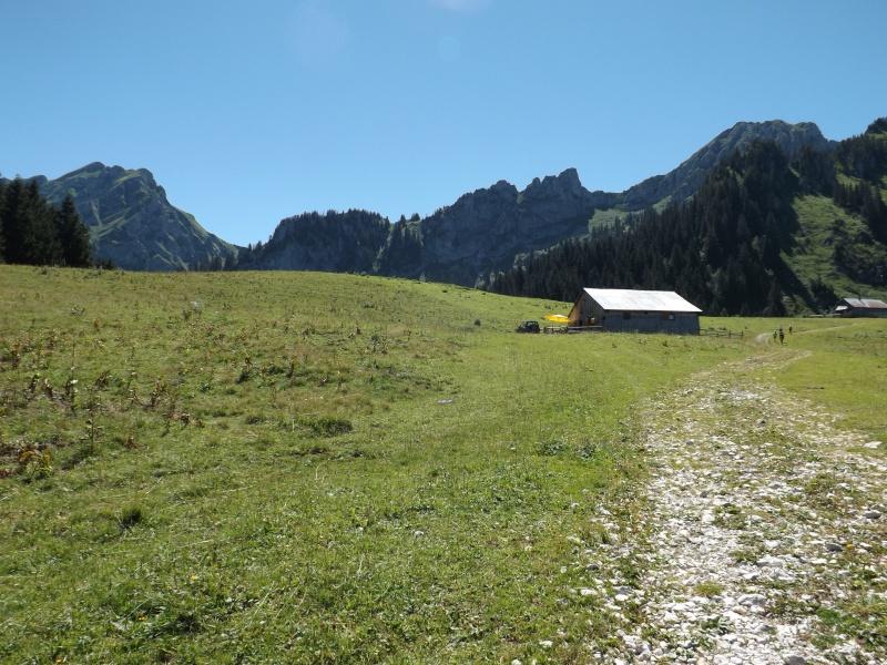 Randonnée dans les alpages... Dscf3014