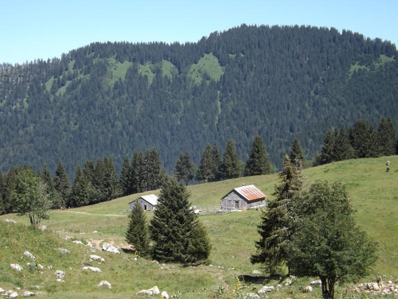 Randonnée dans les alpages... Dscf3015
