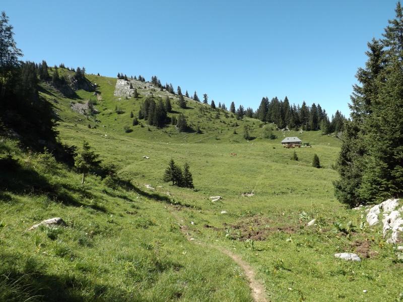 Randonnée dans les alpages... Dscf3017