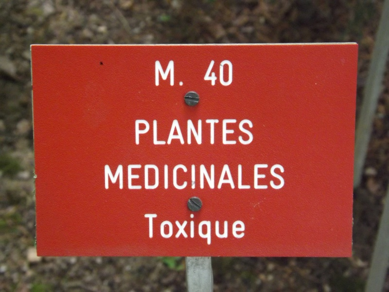 Les trésors oubliés des jardins des plantes Dscf3410