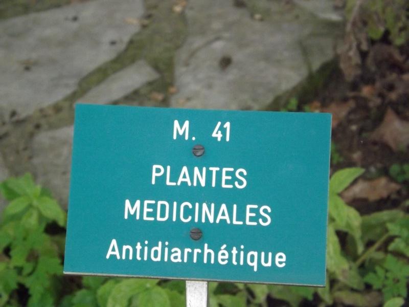 Les trésors oubliés des jardins des plantes Dscf3413