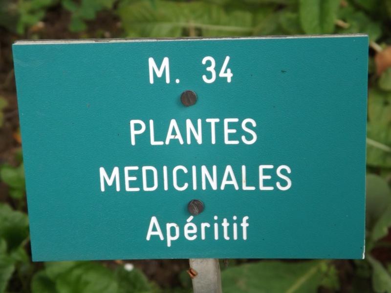 Les trésors oubliés des jardins des plantes Dscf3416