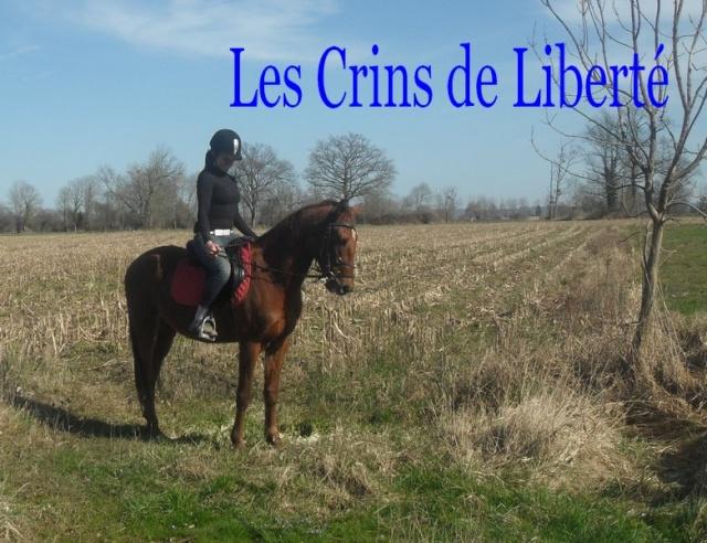 QUICKLY, poney New Forest PP, sauvé par Clémence64 !!!! (Mai 2013) - Page 5 Sdc11215