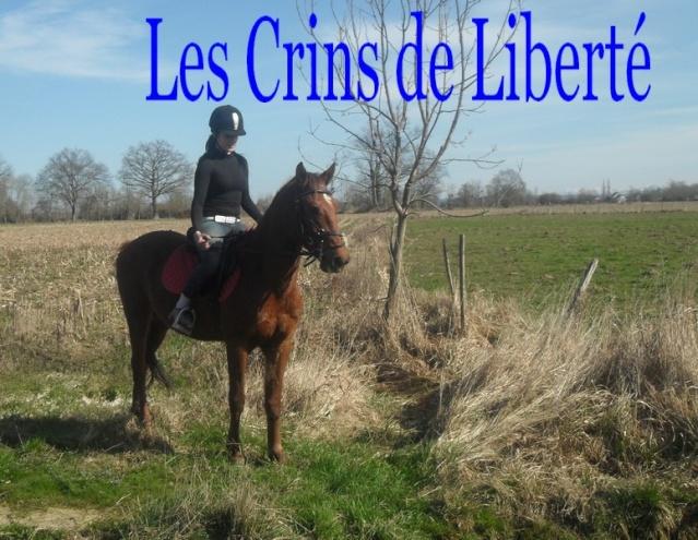 QUICKLY, poney New Forest PP, sauvé par Clémence64 !!!! (Mai 2013) - Page 5 Sdc11216