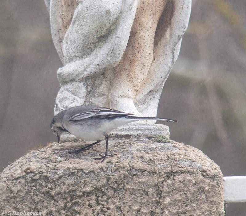 Décoration de statue Berger10