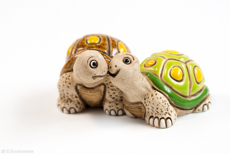 Tortues amoureuses Natmor10