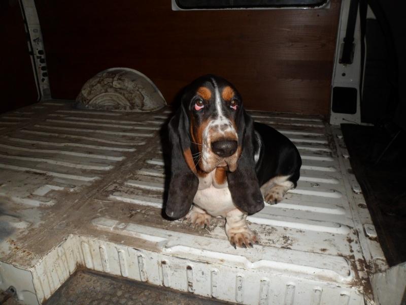 mon compagnon canin et  felidé Sam_2414