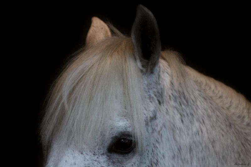 [DISCUSSION] Les grands (et petit) nom de l'équitation internationale. Img_6010