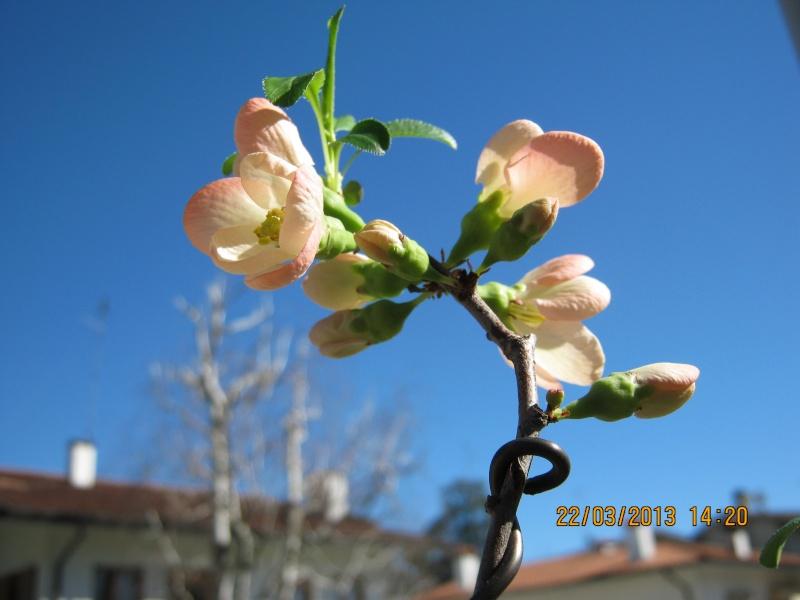 Piccoli bonsai crescono - Pagina 2 Foiaro20