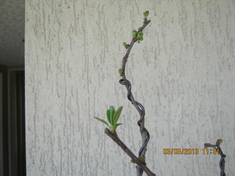 Piccoli bonsai crescono - Pagina 2 Piccol10