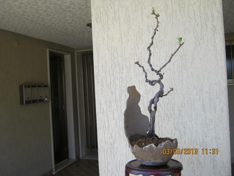Piccoli bonsai crescono - Pagina 2 Piccol11