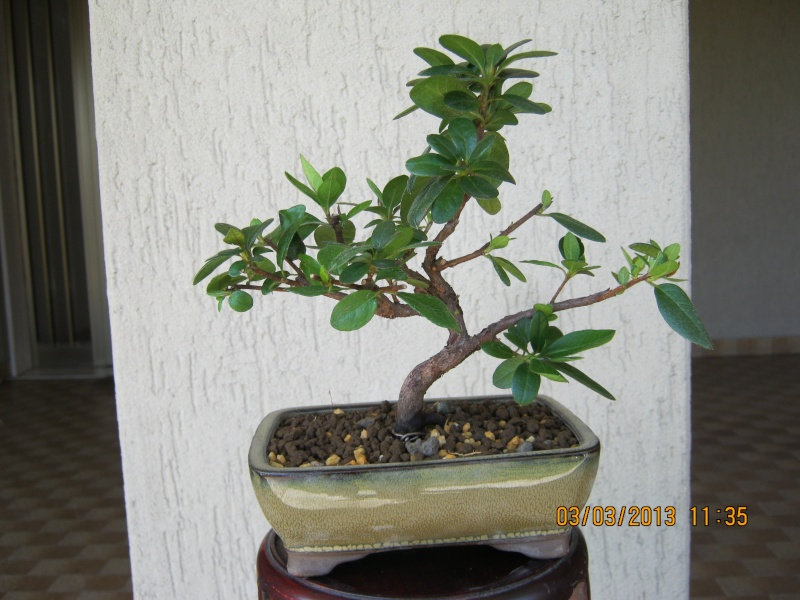 Piccoli bonsai crescono - Pagina 2 Piccol13
