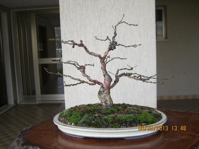 La mia piccola quercia antica. Piccol14