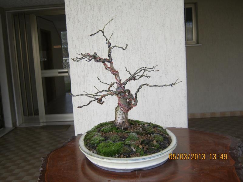 La mia piccola quercia antica. Piccol15