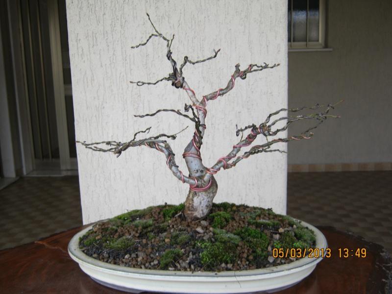 La mia piccola quercia antica. Piccol16