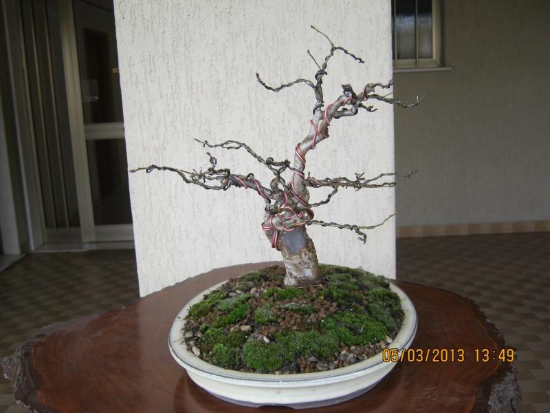 La mia piccola quercia antica. Piccol17