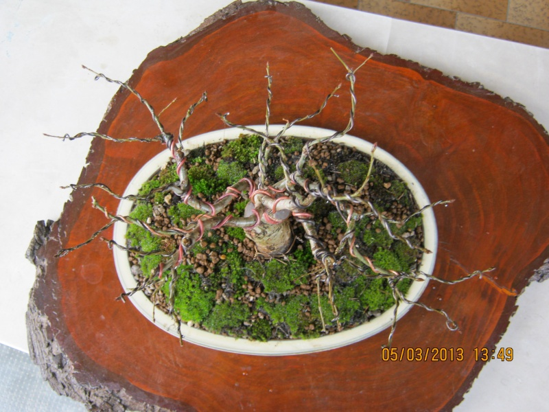 La mia piccola quercia antica. Piccol18
