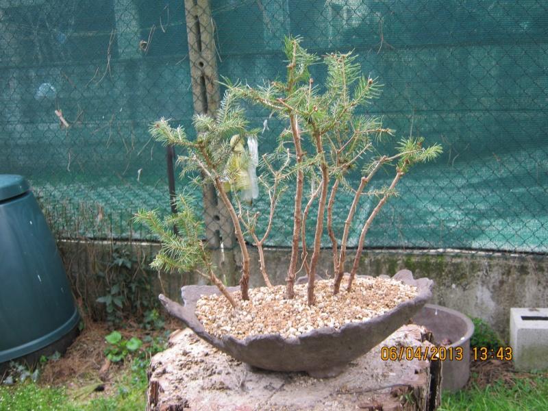 Piccola pineta Primav10