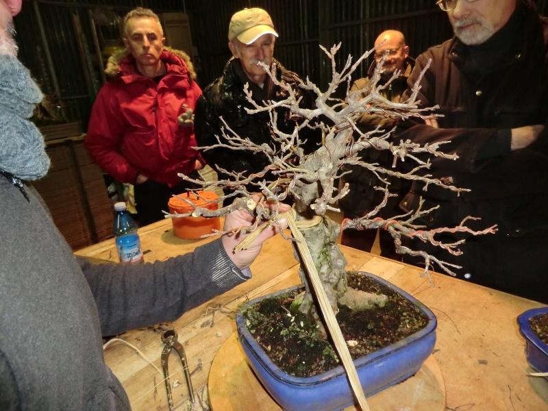 Piegatura di un grosso ramo al Bonsai Club Laudense Applic10