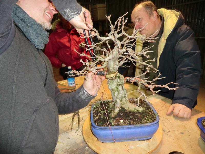 Piegatura di un grosso ramo al Bonsai Club Laudense Applic13