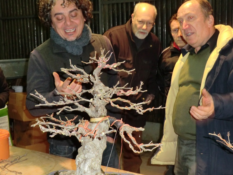 Piegatura di un grosso ramo al Bonsai Club Laudense Commen10